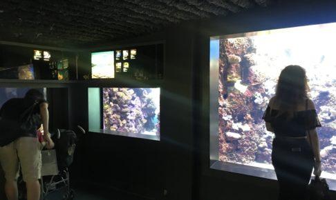 ワイキキ水族館(Waikiki Aquarium)