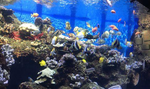 ワイキキ水族館(Waikiki Aquarium)4