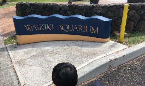 子連れでワイキキ水族館